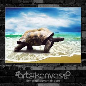 Kaplumbağa Kanvas Tablo