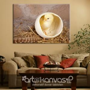 Yumurta ve Civciv Kanvas Tablo