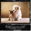 Kedi Köpek Kanvas Tablo